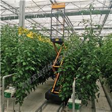 朗瑞奇生产 温室采摘升降车 大棚轨道采摘车 温室轨道采摘车