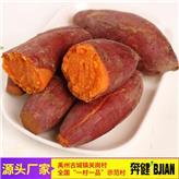河南红薯批发厂家 西瓜红红薯 红心番薯价格 禹州奔健红薯种植基地