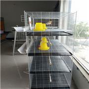 养殖蛋鸡笼 养鸡笼具生产厂家 三层鸡笼价格 支持定制
