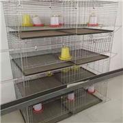 养殖鸡笼 肉鸡笼加工 养殖蛋鸡笼厂家 养殖设备生产